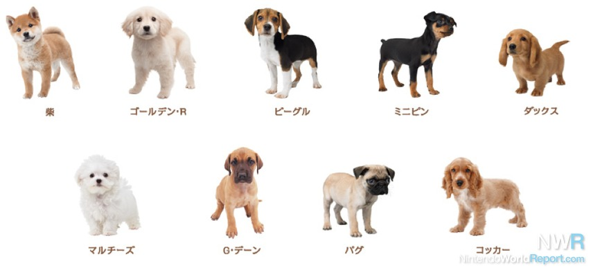 Nintendogs Cats Dog List