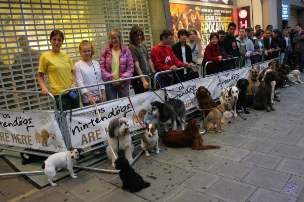 Humans and canines wait for the store opening